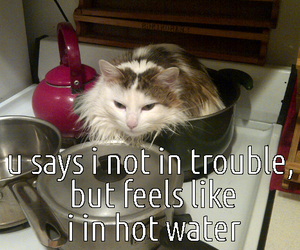 cat, meow, and funny cat image