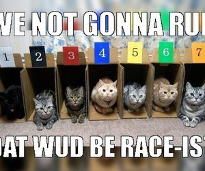 racist, 1k4n6m9h, and cat race image