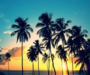 beach, palmeiras, and fim de tarde image