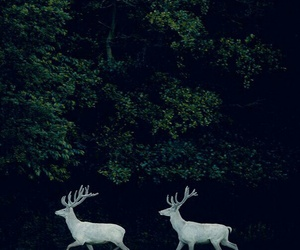 deer, forest, and white image