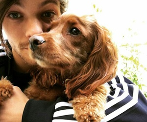 dog, louis tomlinson, and cute image
