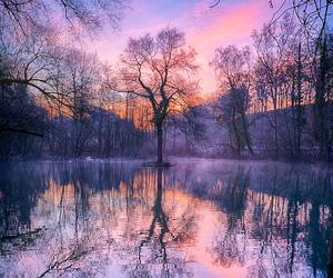 nature, tree, and sunset image