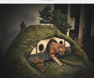 cat, funny, and hobbit image