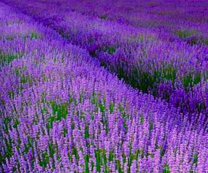 field, spring, and purple image