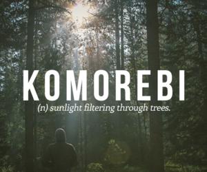 words, quotes, and komorebi image