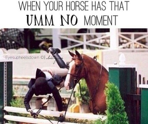horse, equestrian, and funny image