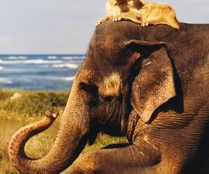 dog, elephant, and animal image