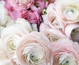 flowers, chic, and pink image