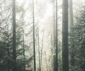 bc, fog, and british columbia image