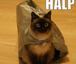 cat, funny cats, and cat bag image