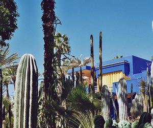 analog, blue, and cactus image