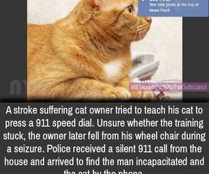 awesome, cats, and funny image