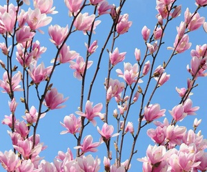 bloom, flower, and sky image