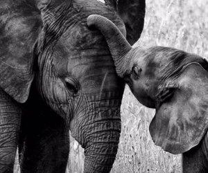 elephant, cute, and love image