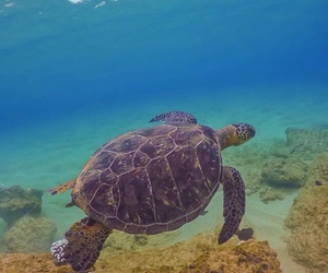 animals, turtle, and water image