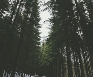 road, forest, and snow image