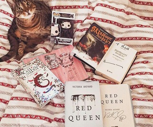 books, 😻, and cat image