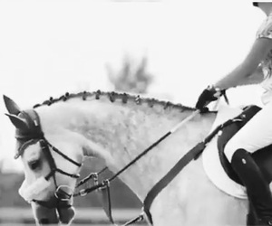 equestrian, riding, and love image