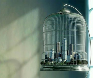 birdcage, city, and photography image