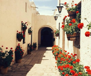 city, flowers, and peruvian image
