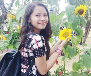 flower, sunflower, and baguio city image