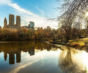 Central Park, city, and tree image