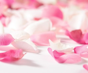 flower, petal, and pink image