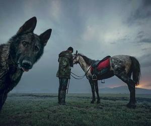 awesome, dog, and horse image