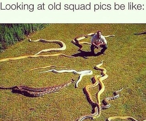 funny, snake, and squad image