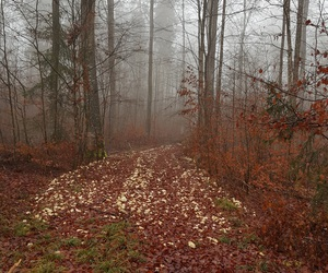 alemania, cold, and forest image