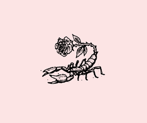 rose, art, and scorpio image
