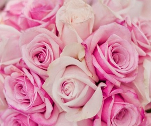 nature and roses image