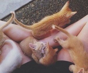 cats, orange, and kittens image