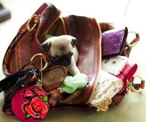 cute, dog, and bag image