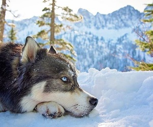 beautiful, eyes, and snow image