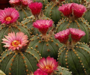 cactus, flowers, and nice image