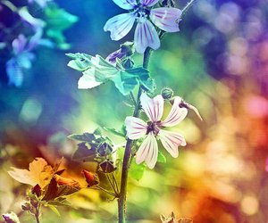 colors, flowers, and colorful image