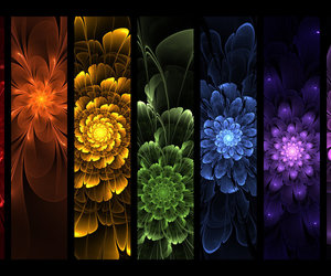 colorful, rainbow flowers, and colors image