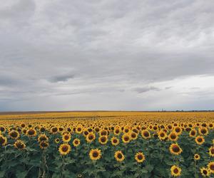 flowers, horizon, and sky image