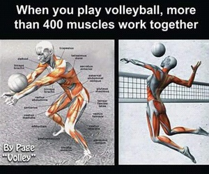 volley ball and asul image