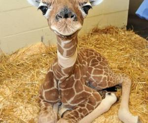 *-*, giraffe, and cute image
