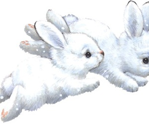 rabbit image