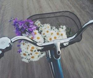 flowers, bike, and daisy image