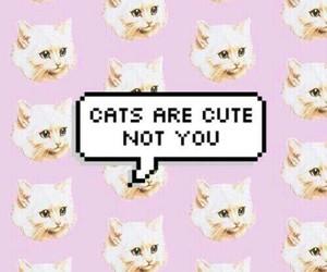 cat, cute, and wallpaper image