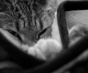 b&w, cat, and warm image