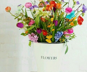 flowers, colours, and nature image