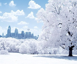 beautiful, city, and trees image