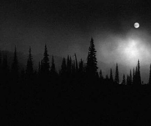 forest, dark, and night image