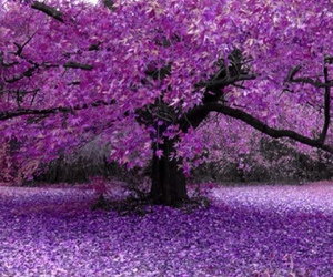 purple and tree image