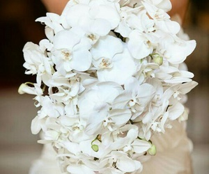 bouquet, bride, and orchid image